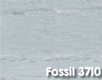 Fossil_3710